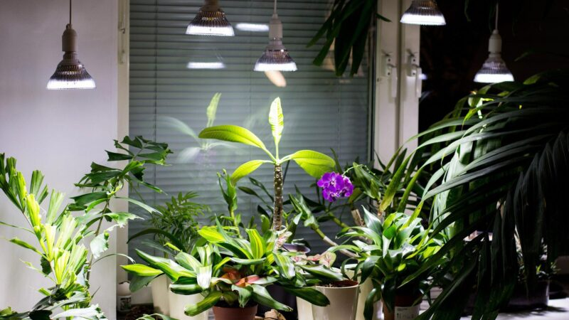 All You Want To Know About The Houseplant Food