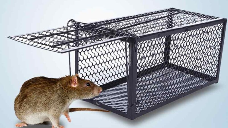 User Guide On Rat Control